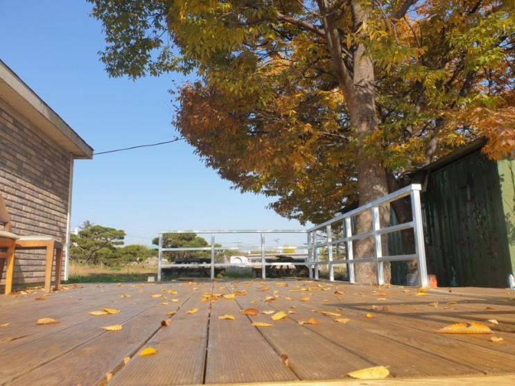 [가을풍경]소나무농장에도 가을이 왔어요. 소나무 낙엽 그리고 수확