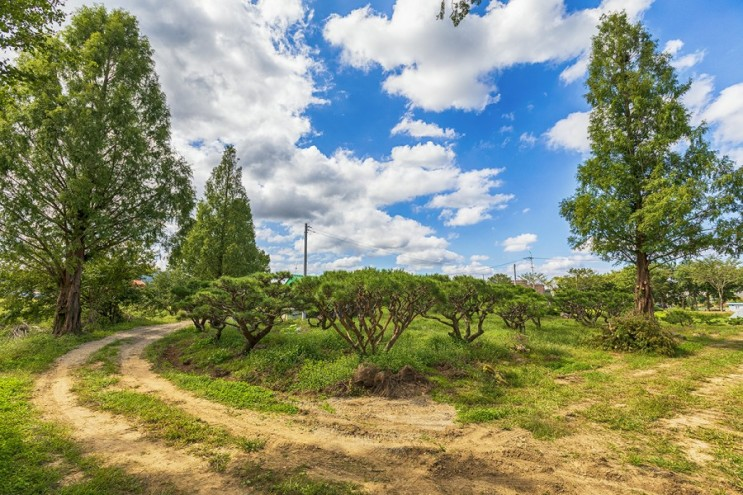 [안성시일죽면] 깊은 가을 속, 대가족 캠핑: 소나무 팔아요 늘푸른예림원