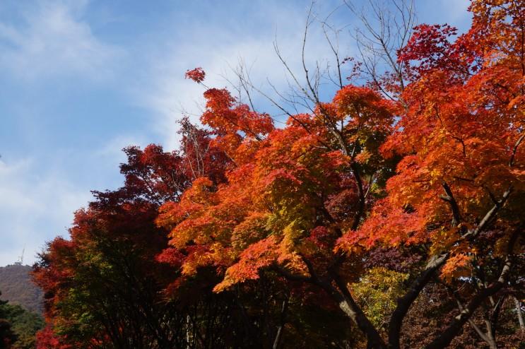 천안 단풍나무숲길 독립기념관 갈만한곳