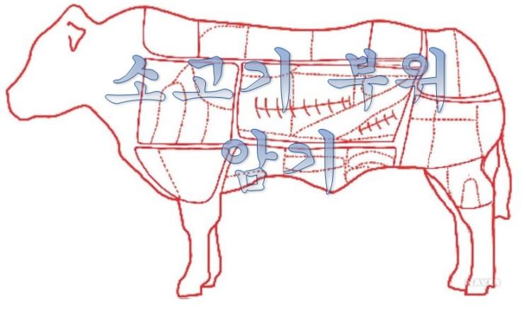 소고기 먹기 전에 알아야 할 소고기 부위(상)