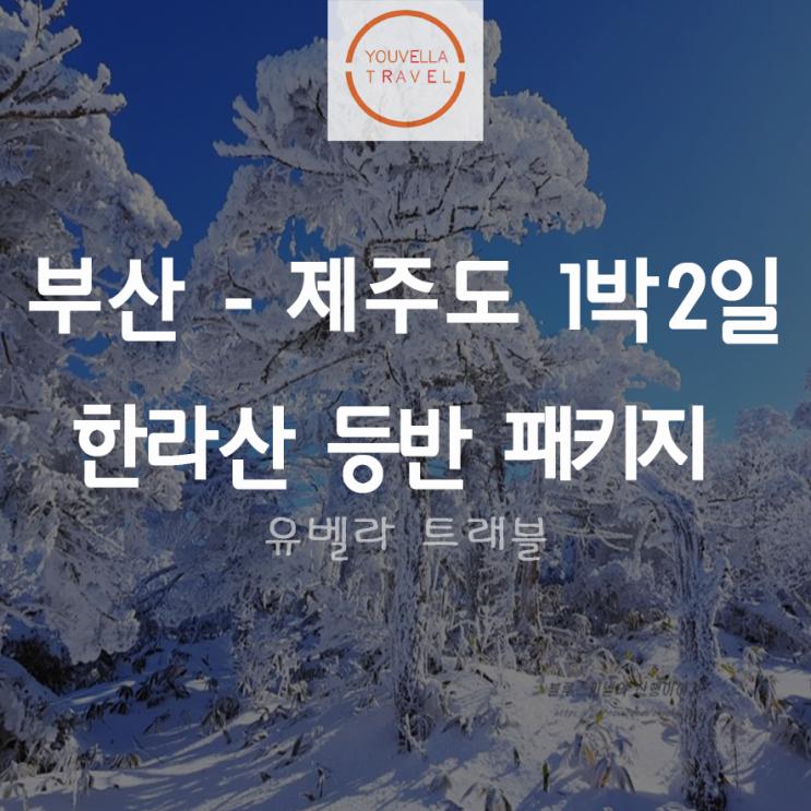 [부산출발] 한라산 등반 1박2일 패키지 에어부산