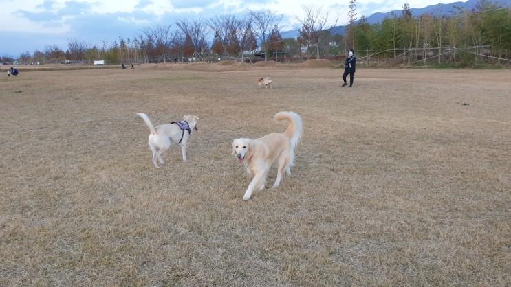 강아지 산책하기 좋은곳, 목줄 없이 뛰어놀수 있는 부산 삼락생태공원