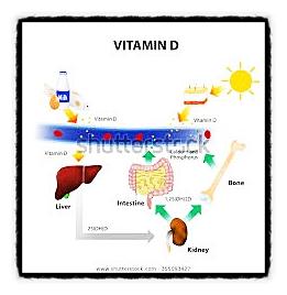 통합 암치료 시에 비타민 D 부족