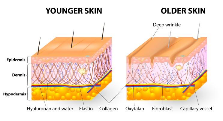 피부 구조 - 반영구가 이루어지는 표피 제대로 알기