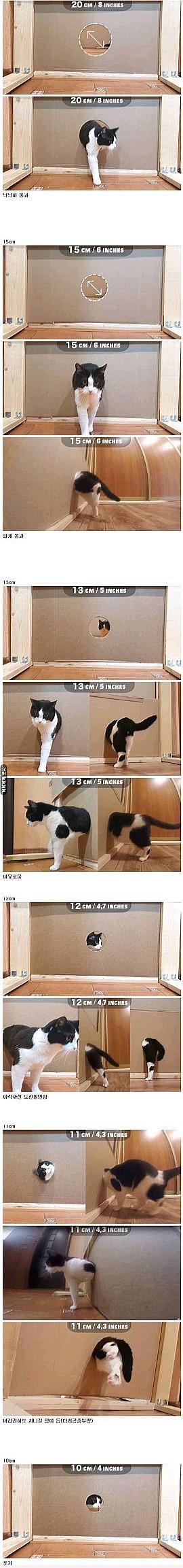 고양이가 좁은 곳 통과하는 실험