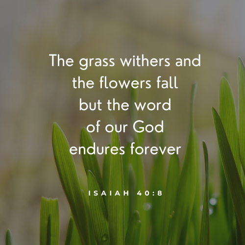 Isaiah 40:8)The Grass withers and the flowers fall but the word of our God endures forever