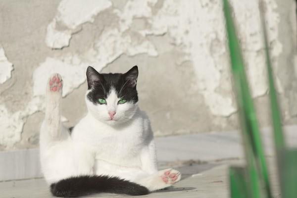 고양이에게는 캣타워가 필수인가요?