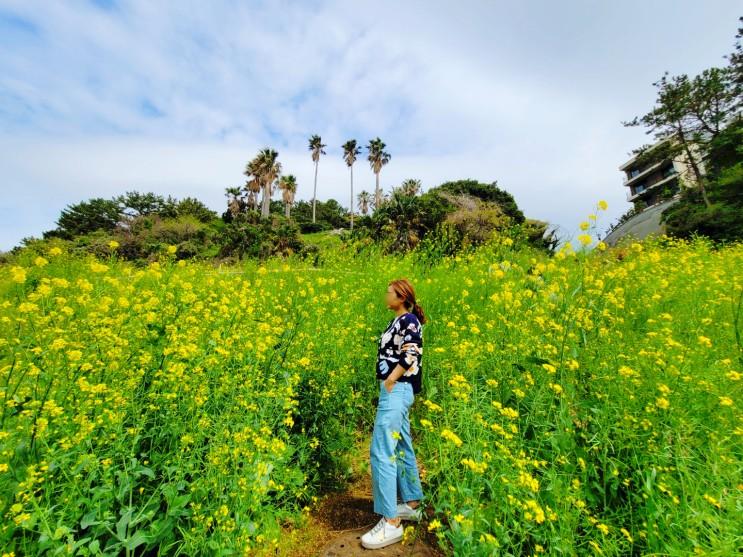 제주여행 가볼만한곳 엉덩물계곡 유채꽃밭 구경