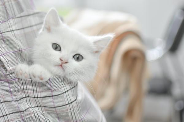 고양이가 식탁이나 싱크대에 계속 올라갈 경우