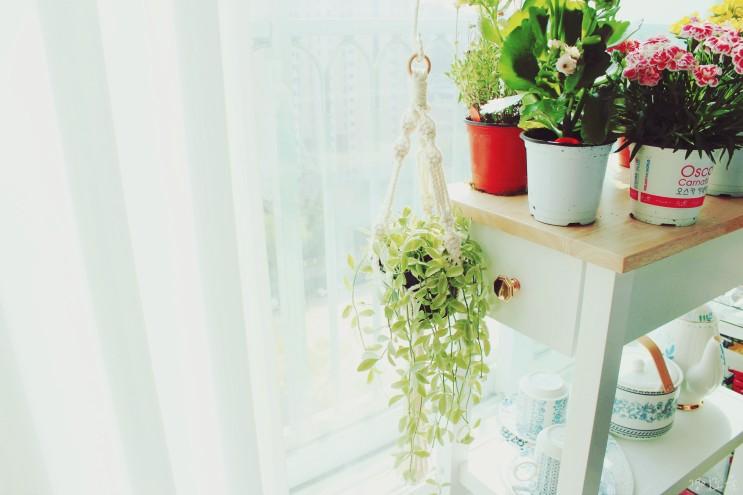 마크라메 화분걸이 베란다 식물 홈카페 인테리어 꾸미기