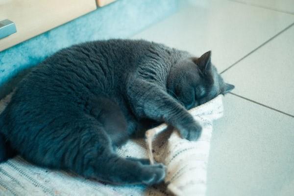 고양이가 현관문이나 베란다에서 울어요