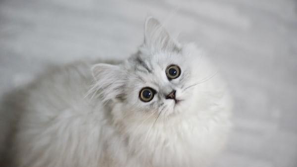 고양이가 아무 이유도 없이 일단 물어요