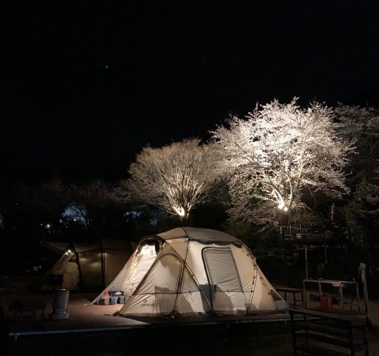 강원도 벚꽃 캠핑장 횡성 벳소에서 만끽한 2박 3일