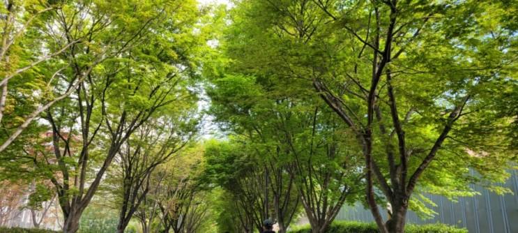 광주광역시 동구푸른길공원 산책하기 좋은 공원