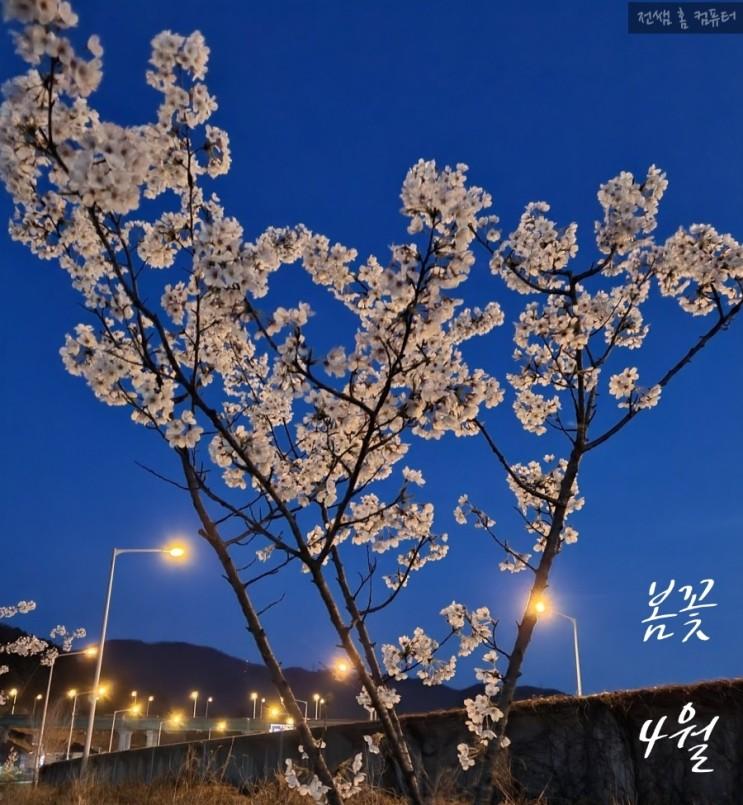 4월의 시 <이해인>_봄시 /벚꽃/봄꽃