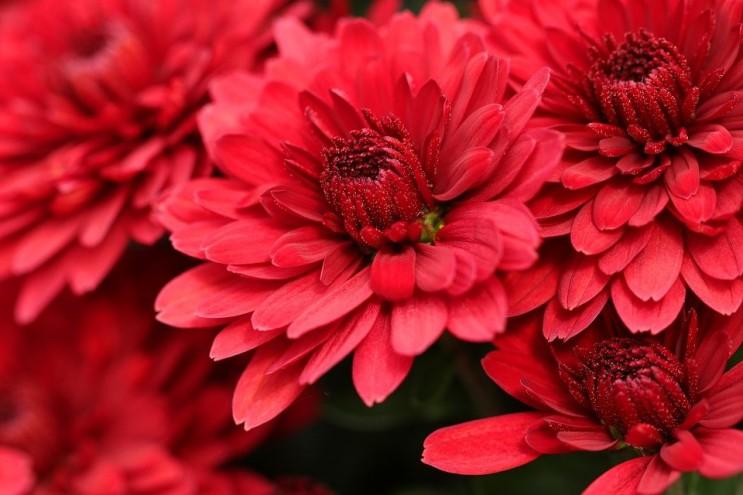 봄철 알레르기는 꽃가루농도 기상정보로 대비하세요!