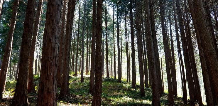4월 어느날  부귀 편백숲