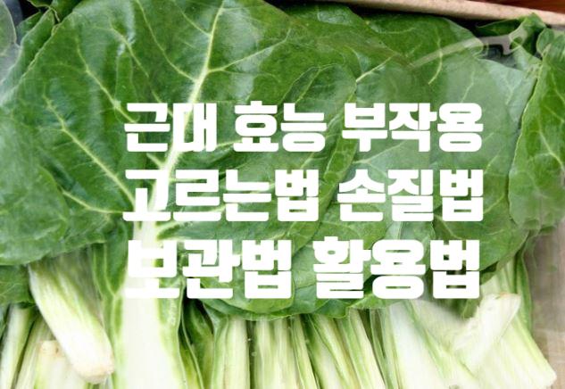야맹증 성장기 식단에 좋은 근대 효능 (ft. 부작용 고르는 법 손질법) 시금치와 먹지 마세요