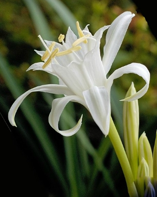 샤론의 꽃 예수