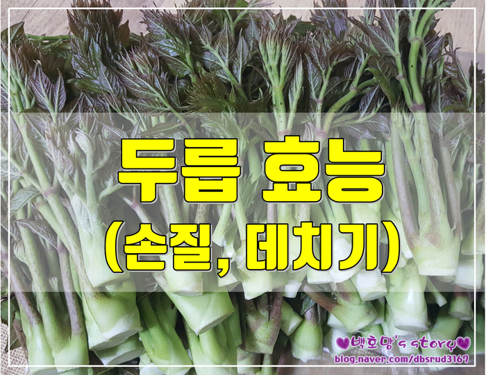 봄나물 두릅 효능과 부작용을 알아보자 (두릅손질,데치기)