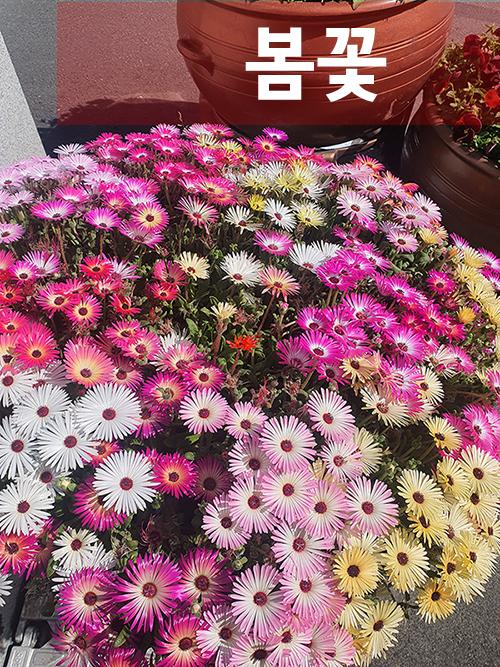 부산 봄꽃이 많이 폈네요.