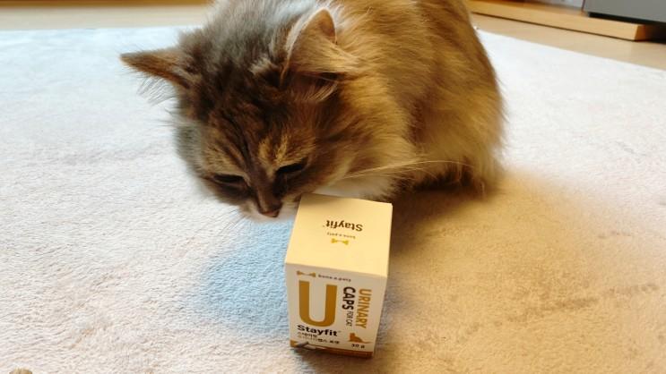본아페티 고양이 신장영양제 : 나이 많은 고양이 신장 건강 관리