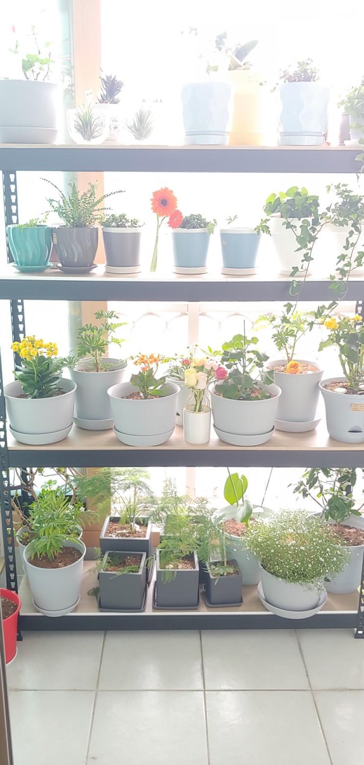 [취미생활] 식물키우기, 베란다정원, 레몬씨앗키우기