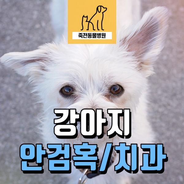 강아지 치과 치료 & 눈 혹 제거 - 용인 죽전동물병원