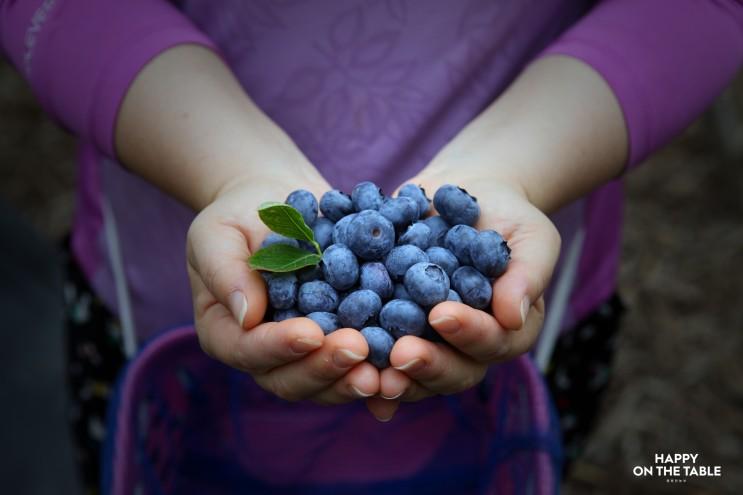 싱싱한 생 블루베리! 행복한농부 햇 블루베리 생과 블루베리 효능