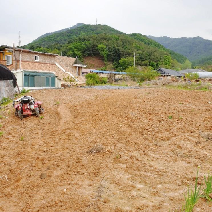 [위드인제이, 제주한달살기숙소] 뜻밖의 육지여행 #1 김유정 문학촌 실레마을을 가다.