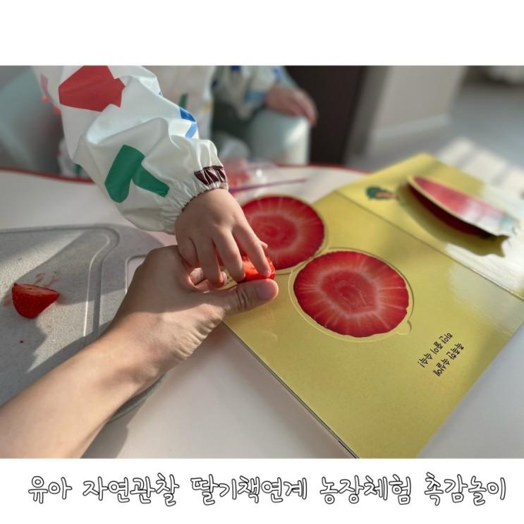 유아 자연관찰 딸기책연계 농장체험 촉감놀이