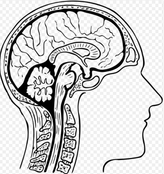 뇌졸중 초기증상 전조증상 치료 (뇌혈관질환, 어지러움 증상)