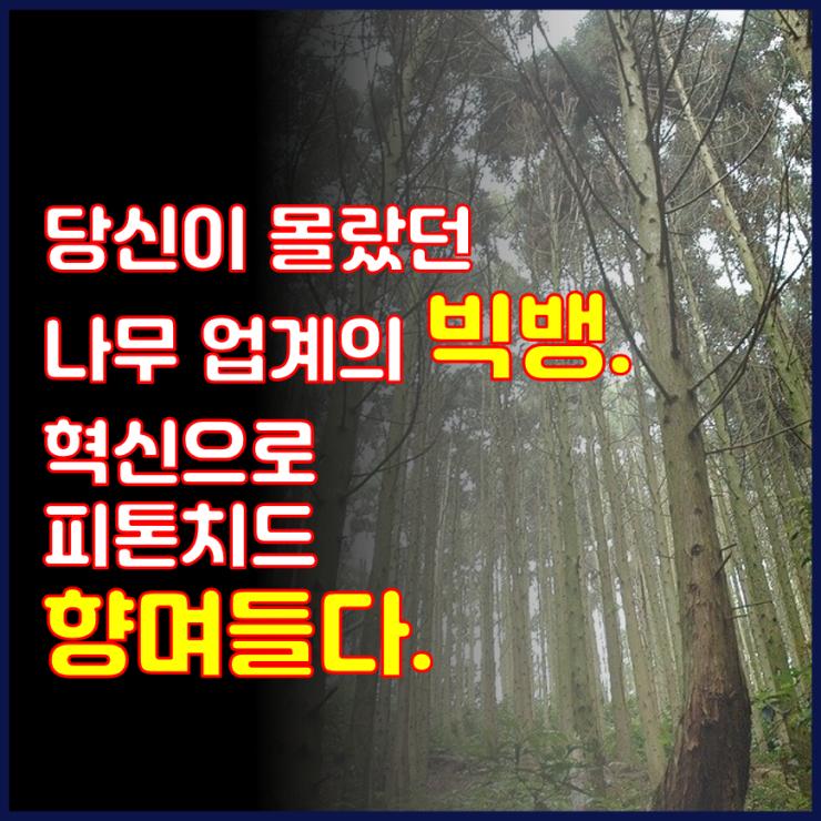 📺 당신이 몰랐던 나무 업계의 빅뱅. 혁신으로 피톤치드 향며들다.