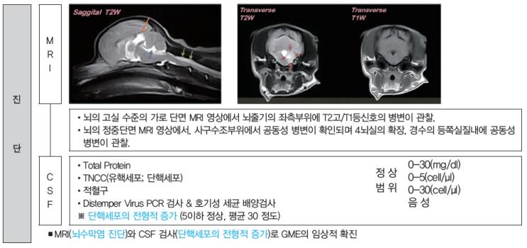 육아종성 뇌수막염(GME; Granulomatous Meningoencephalitis)에 대해 알아봅시다.