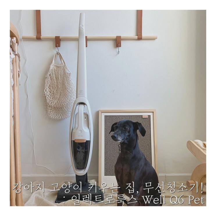 강아지 고양이 키우는 집의 집사가전 무선청소기 추천! : 일렉트로룩스 Well Q6 Pet