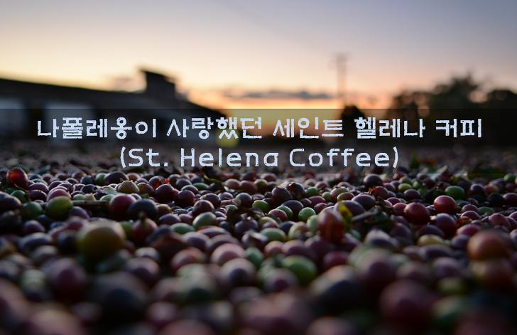 세계 3대 명품커피 세인트헬레나 커피 종류와 특징의 모든것!!