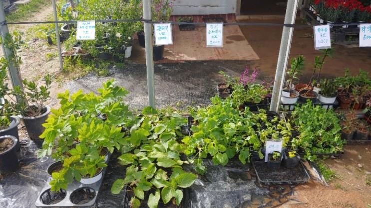 주말농장 5월 모종 가격 수확 시기 (상추, 비트잎, 쑥갓)