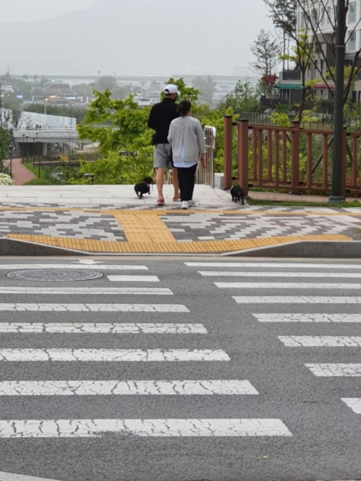 백운호수 서울근교 데이트코스 홀로 산책