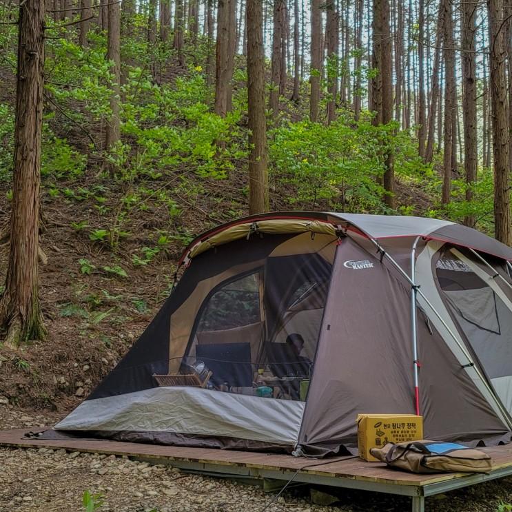 장성편백치유의숲 편백힐 캠핑장 후기