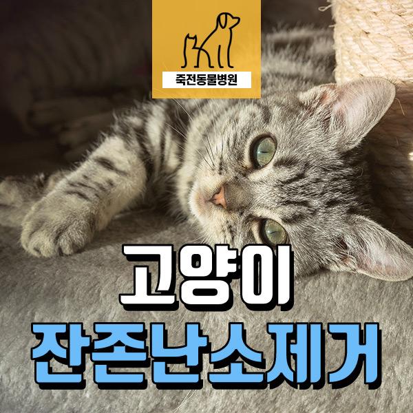 고양이 자궁이 기형이에요! 잔존 난소 제거 수술 - 용인 죽전 동물병원