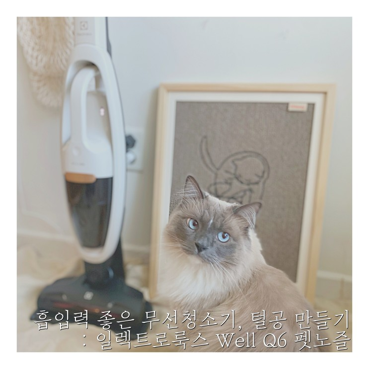 흡입력 좋은 무선청소기로 고양이 털공 만들기 : 일렉트로룩스 Well Q6 펫노즐