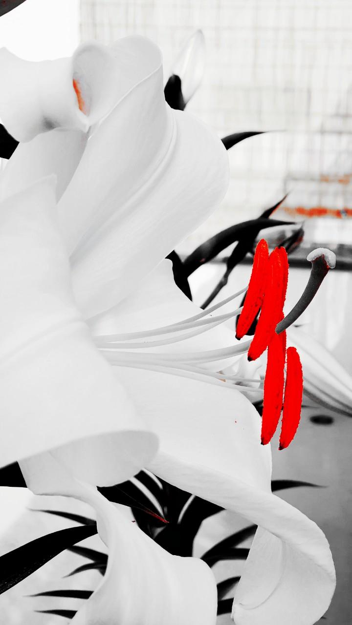 꽃~~자세히 보니 더 이쁘다~~ 백합키우기~~