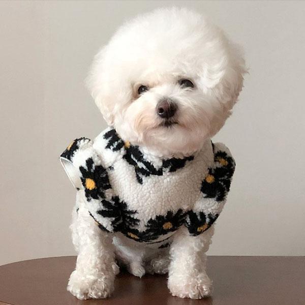 선호도 좋은 바이담수미 강아지 양털 꽃프릴 티셔츠, 화이트 ···