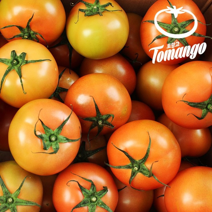 많이 찾는 [아맛] 스테비아 토마토 토망고 완숙 찰 토마토 1kg/3kg/5kg, 1kg 추천해요