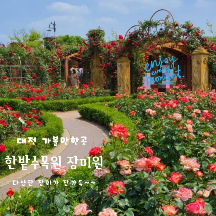 대전 가볼만한곳  장미가 아름다운 한밭수목원