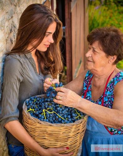 유럽왕실에서 사랑받는 와인, 판티니 몬테풀치아노 다브루쪼