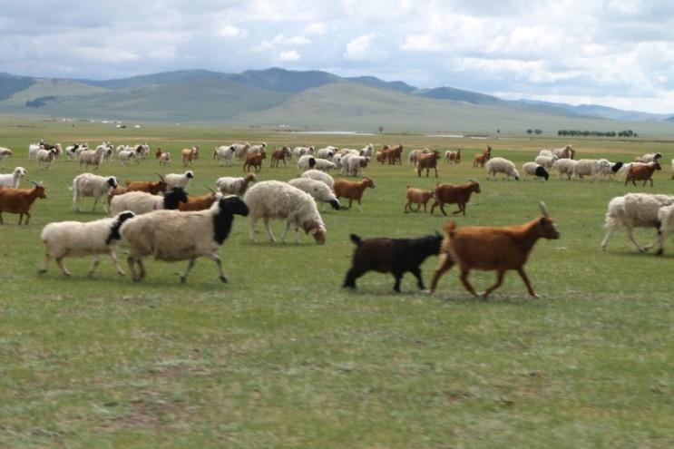 원시시대 체험..? 몽골여행