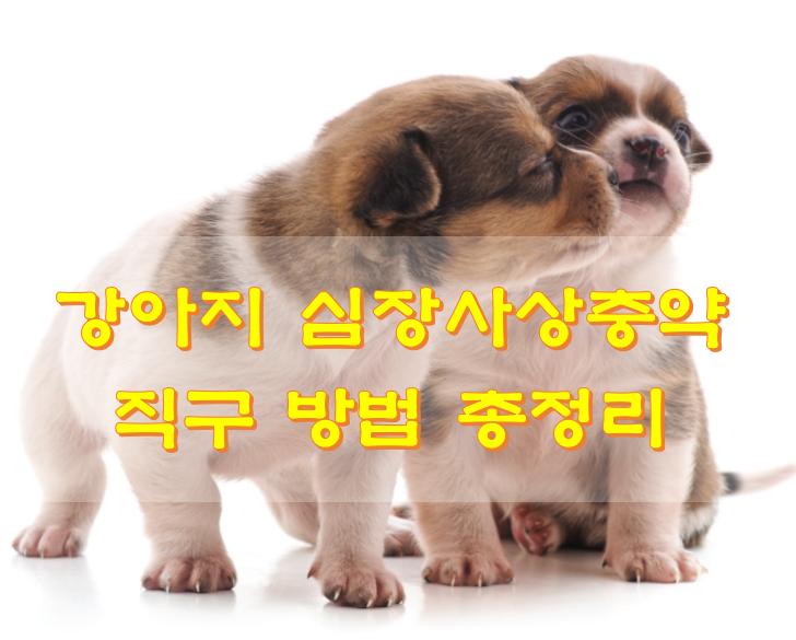 강아지 심장사상충약 직구 방법 총정리