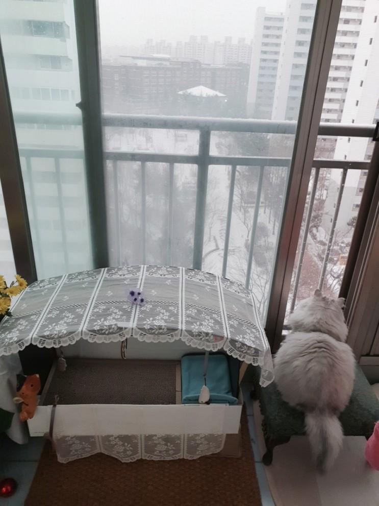 눈오는날...고양이와 미역떡국
