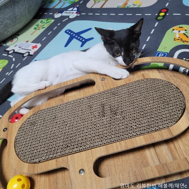 고양이 스크래쳐 방울놀이로 사냥본능 깨워주기